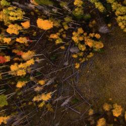 Droon RUAV UAV drone aerial airborne õhuseire fotograafia õhuliinid laserskaneerimine airborne inspection elektrilevi elering power grid elektrivõrk elektriliinid õhuliinid hepta group energy energeetika elektroenergeetika lennuk lennukid helikopter kopter laba tiivik rootor forests forestry saving forests green